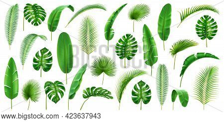 Tropical Branches And Leaves Large Collection. Isolated Set Of Leafage Of Palms And Palmetto, Banana