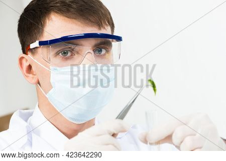 Scientist Puts Sample Into Test Tube. Man In Safety Mask And Latex Gloves Holding Test Tube And Twee
