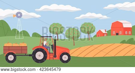 Flat Agriculture Background With Farmer Driving Trailer And Carrying Harvested Pumpkins In Trailer V
