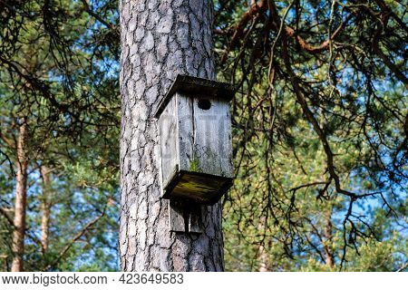 Wooden Bird Cage, Bird House In The Forest