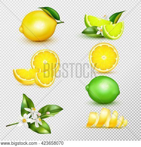 Citrus Lemon Lime Whole Half Slice Spiral Peel Twigs Blossom Realistic Set Isolated Transparent Back