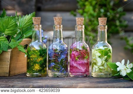 Bottles Of Essential Oil Or Infusion Of Medicinal Herbs, Healing Plants On Wooden Table. Alternative