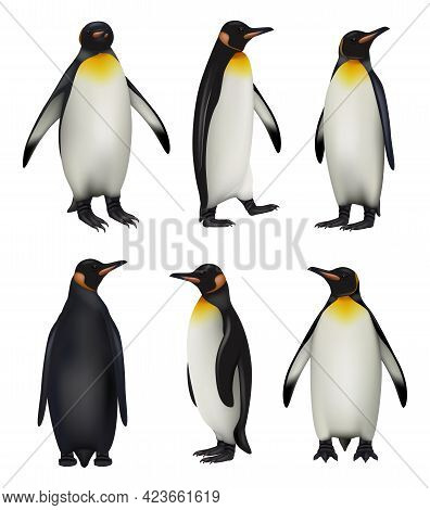 Penguins. Antarctica Wildlife King Penguins In Realistic Style Cold Environment Decent Vector Illust