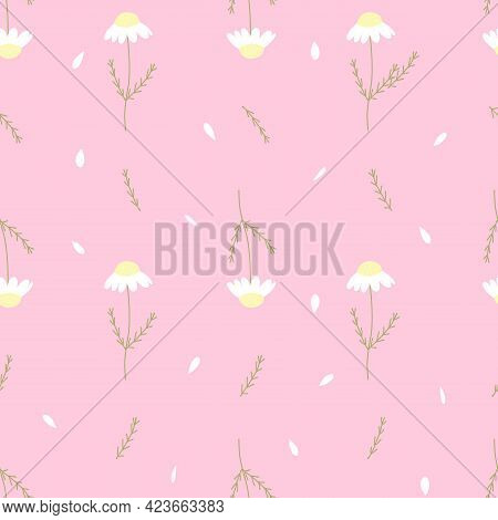 Vector Seamless Pattern With Chamomile And Petals On Pink Background. For Decoration, Invitation Bab
