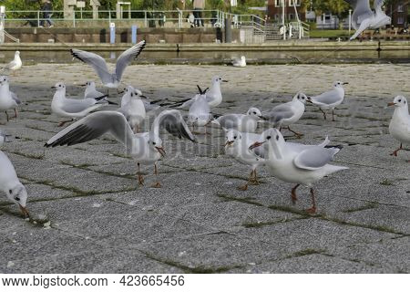 Seagulls Standing And Catching Some Sun In One Of The Oldest Streets