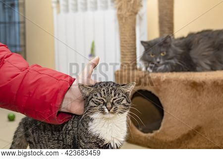 A Man Hand Strokes A Cat, Who Enjoys And Delights In Stroking Its Fur And Head, In An Animal Shelter