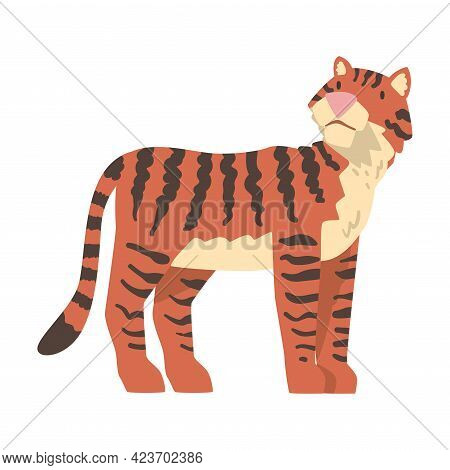 Tiger African Animal, Wild Predator Jungle Animal Cartoon Vector Illustration