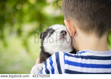 A Little Boy In A Striped T-shirt Hugging Husky Puppy Outdoors. A Child With His Favorite Four-legge