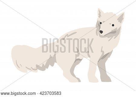 Polar Fox Arctic Animal, Wild North Mammal Cartoon Vector Illustration