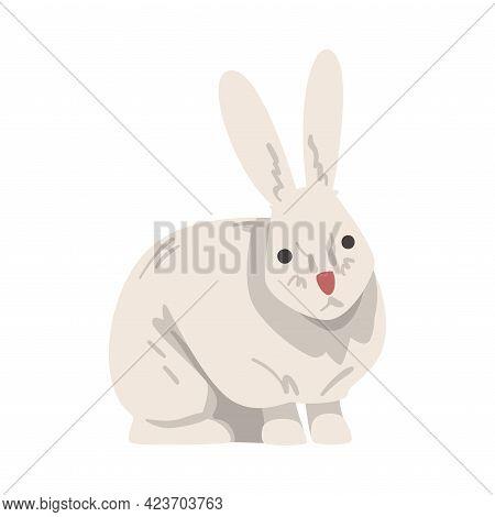 White Hare Arctic Animal, Wild Polar Mammal Cartoon Vector Illustration