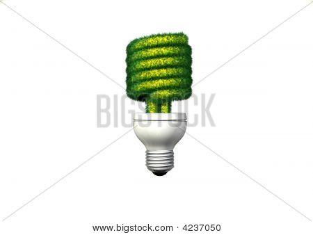 Grassy Compact Fluorescent Light