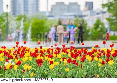 Flowers Of Different Colors, Tulips Grow In A Flower Bed In The City Park For Family Walks, Entertai