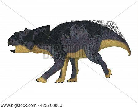 Chasmosaurus Juvenile Dinosaur 3d Illustration - Chasmosaurus Was A Ceratopsian Herbivorous Dinosaur