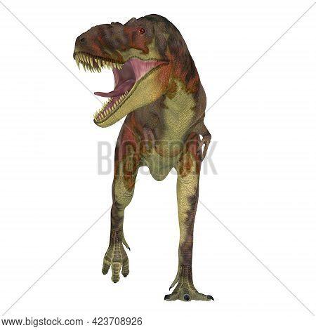 Daspletosaurus Dinosaur On White 3d Illustration - Daspletosaurus Was A Carnivorous Theropod Dinosau