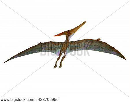 Pteranodon Wings Extended 3d Illustration - Pteranodon Was A Carnivorous Pterosaur Reptile That Flew