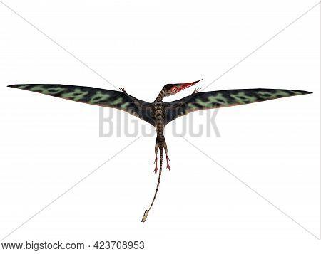 Rhamphorhynchus Wings Extended 3d Illustration - Rhamphorhynchus Was A Carnivorous Flying Pterosaur