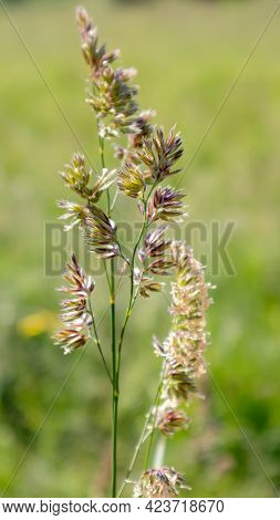 Beautiful Wildflowers And Wild Herbs On A Green Meadow. Warm And Sunny Summer Day. Meadow Flowers. W