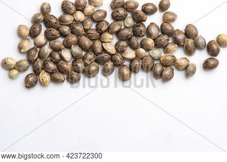 Cannabis Seeds On White Background, Close Up Of Hemp Seeds For Planting Agriculture Herbal Medicine,