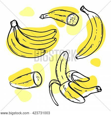 Ripe Bananas Delicious Tropical Fruit Individually Peeled And In A Bunch In Sketch Style For Design
