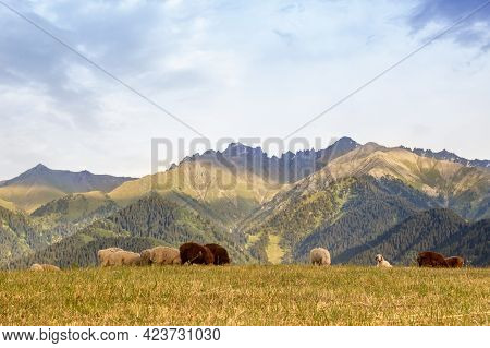 A Herd Of Rams Grazes In The Qazaqstan Mountains Meadows. Jailau View With Copy Space.