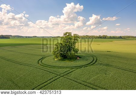 View From Above On Lonely Tree With Shadow In A Green Field And Sky With Clouds In The Background