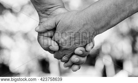 Hands Of An Elderly Couple, Close-up. Olderly Couple Holding Hands During Walking. Love Concept.