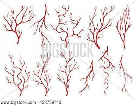 Collection of human veins. Red silhouette vessels, arteries or capillaries on white background. Concept anatomy element for medical science. isolated symbol of blood system
