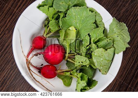 Fresh And Ripe Red Radish With Green Leaves In A Plate. Diet Food. Spring Homemade Radish Salad.
