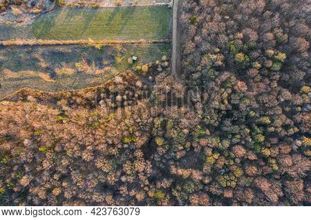 Top view of broadleaf forest in the beginning of spring
