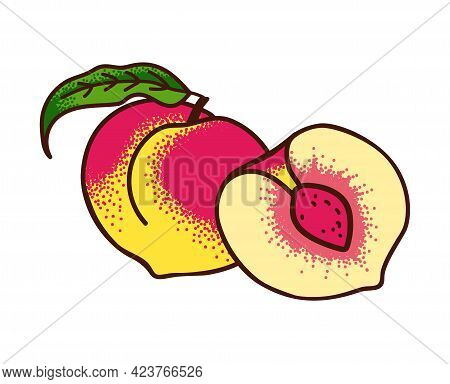 Ripe Peaches With A Leaf And Peach Half Isolated On White. Vector Illustration Engraving Style.