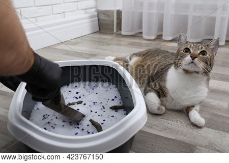 Man In Gloves Cleaning Cat Litter Tray At Home, Closeup