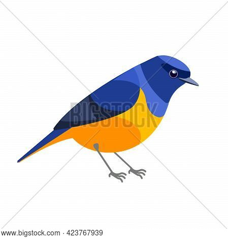 Niltava Or Rufous-bellied Niltava Is A Species Of Bird In The Family Muscicapidae. Tropical Passerin