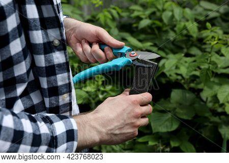 Man Sharpening Pruner Outdoors, Closeup. Gardening Tools