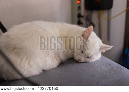 Closed-up Of Cat Lie Down On Folding Chair.