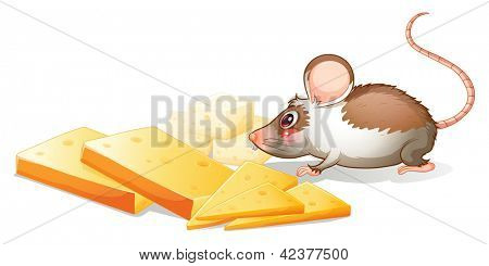 Illustration of the slices of cheese with a mouse on a white background