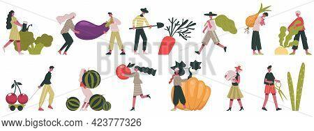 Harvesting Vegetables. Fall Harvesting, Fruits And Vegetables Cultivation, People Working On Farm Ve