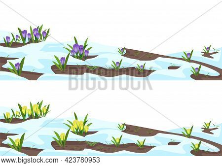 Crocuses In The Snow Set. The First Spring Flowers Bloom From The Snow. Beautiful Spring Elements Ba