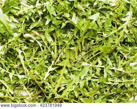Dandelion Fresh Leaves