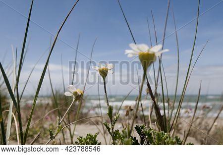 Wild Plants Along Mediterranean Coast In Italy