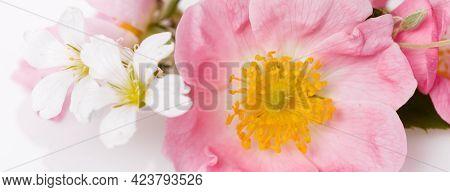 Festive Flower Wild Pink Rose Composition On The White Background. Overhead Top View, Flat Lay. Copy