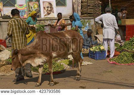 Pushkar, Rajasthan, India - November 5, 2008: Street Scene In Pushkar During The Annual Pushkar Fair