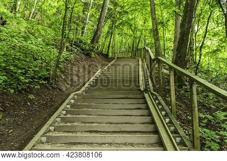 Wooden Boardwalk Tourist Stairs Trail With Trees