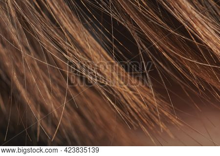 Brown Healthy Clean Shiny Hair Ends  Macro Clsoe Up View