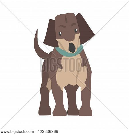 Dachshund Dog, Front View Of Cute Pet Animal With Brown Coat And Blue Collar Cartoon Vector Illustra