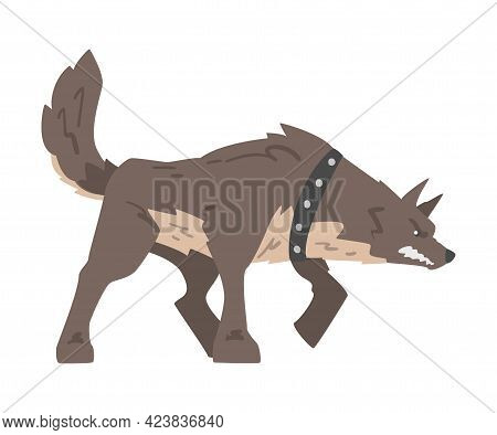 Aggressive Dog In Leather Collar Baring Its Teeth Standing In Fighting Pose Vector Illustration
