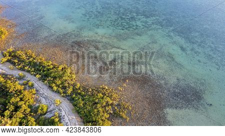 Aerial Over The Ocean At Low Tide Showing Underwater Detail And Coastal Vegetation In The Warm Glow
