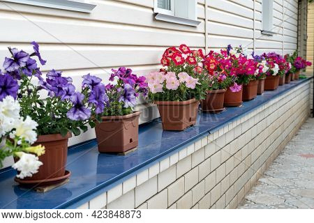 Front Of House With Pots With Blooming Flowers. Beautiful Flowers Of Petunia In Pots On The Windowsi