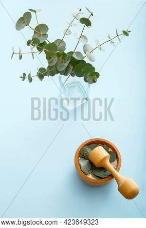 Eucalyptus Branches And Wooden Mortar For Production Eucalyptus Essential Aroma Oil On Colored Blue