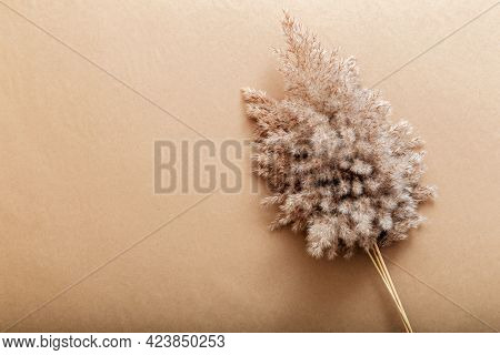 Reed Pampas On Beige Craft Paper Background. Beige Frame Background With Copy Space And Flower Of Fl