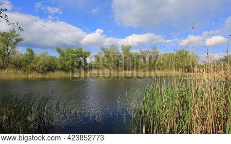 Summer landscape with wild lake in forest
